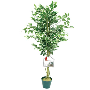 DeVille Ficus Tree 4ft