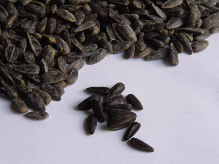Black Sunflower Seeds 2KG