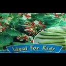 De Ree Ideal for Kids Seeds 7 Varieties