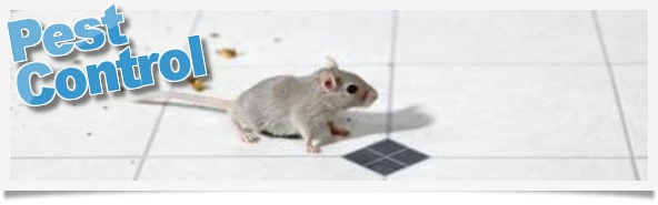 Pestclear - The Best Way to Keep Mice, Rats, & Crawling Insects out of Your Home.